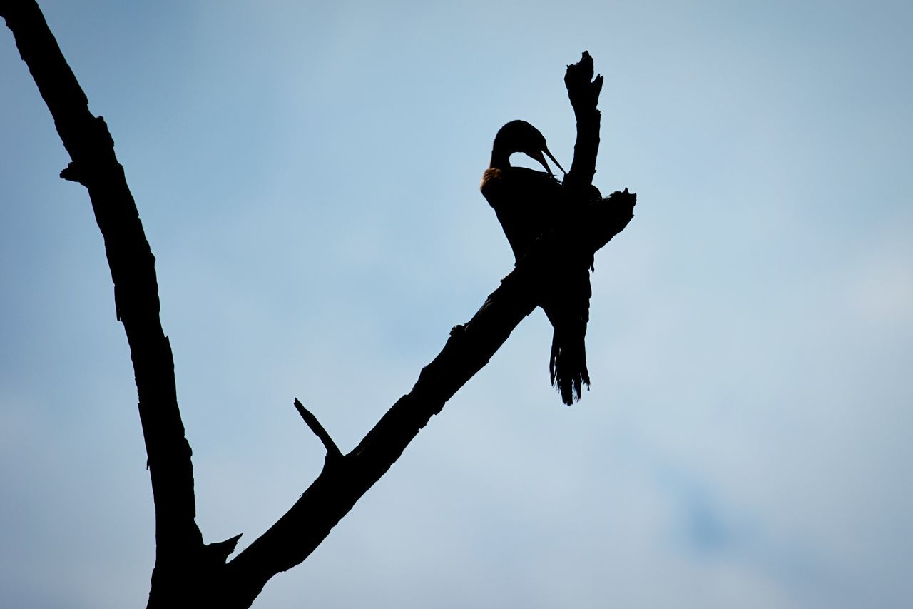 Beautiful stock photos of schlange, Silhouette, United States, beauty In Nature, branch