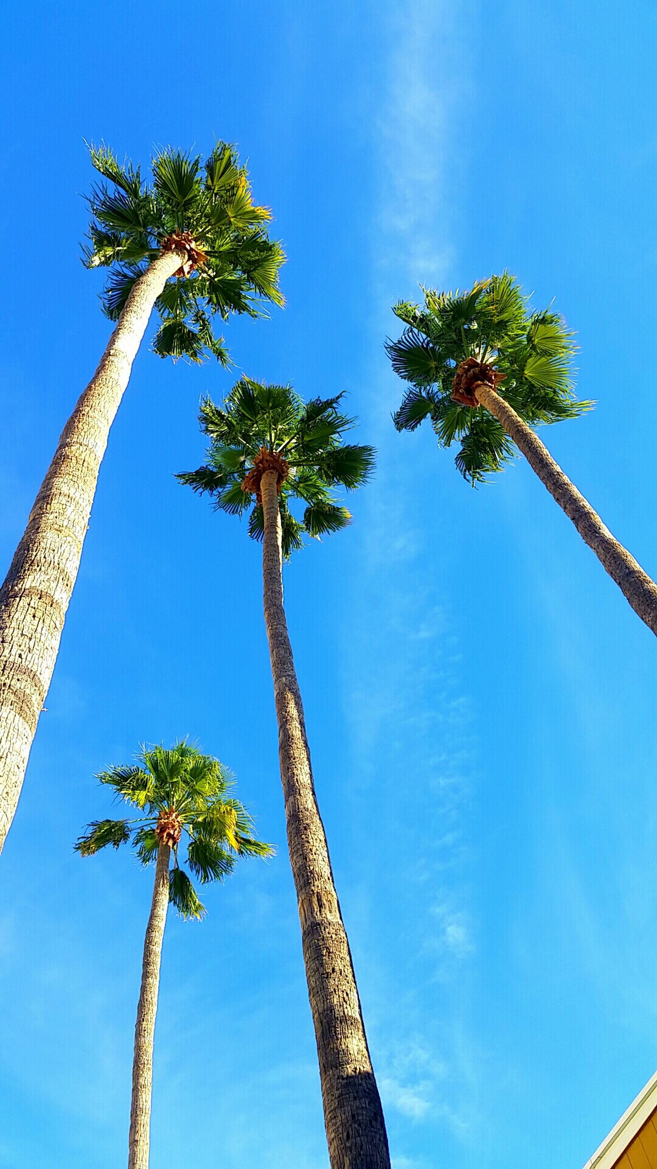 Check This Out Wintertime in Mesa Arizona . It makes Hot Weather in the Summer ☀ worth it! It's Okay, I'd Be Jealous Too :) Palm Trees Tree_collection  Tree And Sky