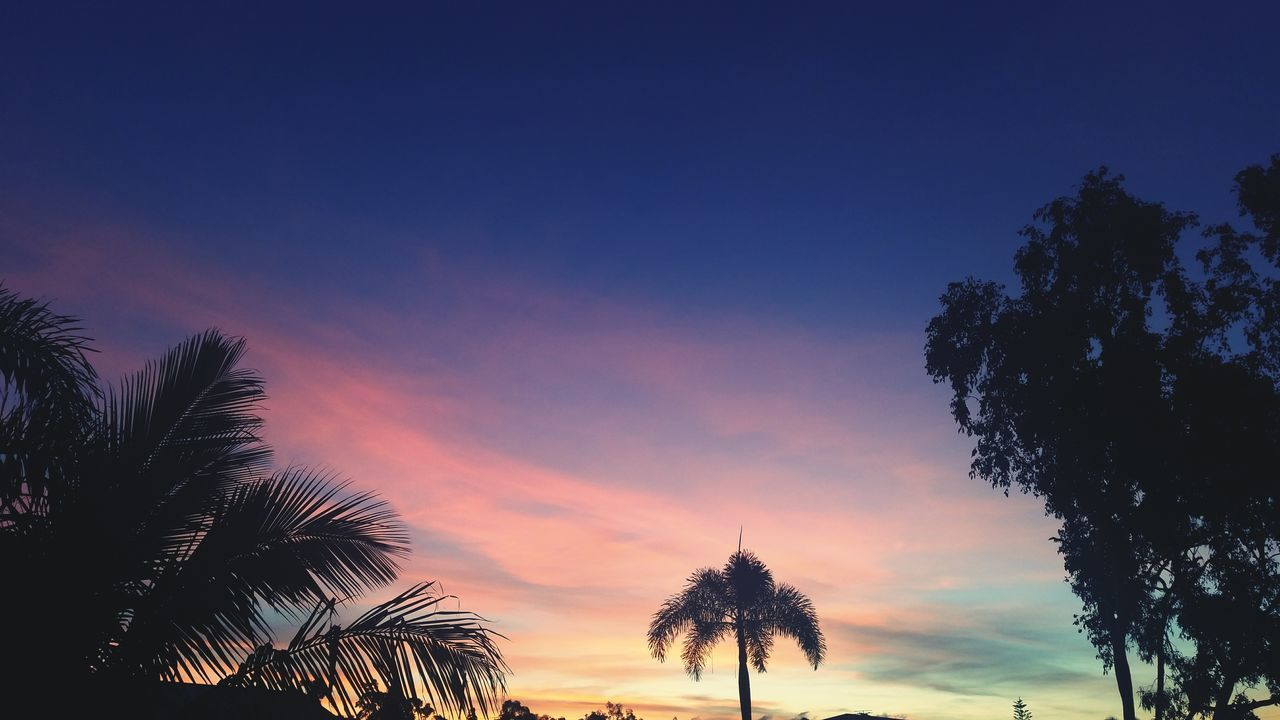 Taken on a Samsung Galaxy S5 Sunset Colours Colors Australia Townsville North Queensland Queensland Samsung Galaxy S5 Outdoors Palm Tree Silhouette Townsville Fine Art Photography Showcase July
