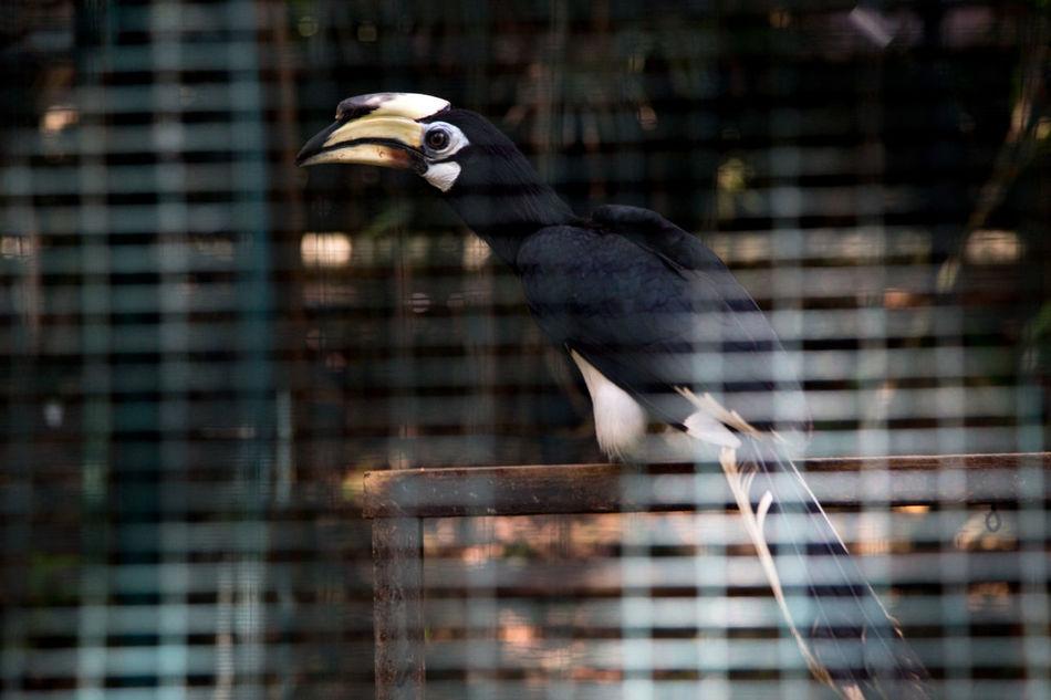 Beak Bird Cage Close-up Hornbill No People One Animal One Bird Tiny Bird