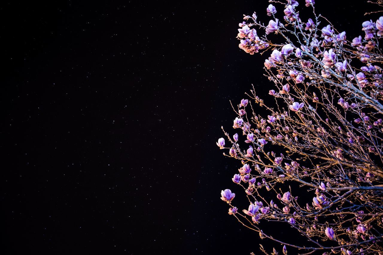 Flower Beauty In Nature Purple Nature No People Fragility Night Outdoors Water Close-up Freshness Flower Head Star - Space EyeEm Best Shots Black Beautiful Tranquility