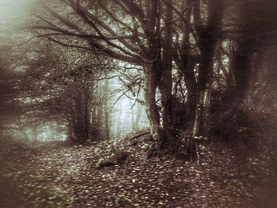 Protecting Where We Play Darkness And Light CreativePhotographer Darkness The Dark Forest Dangerous Shadow Forest Dark Art Misterious Way