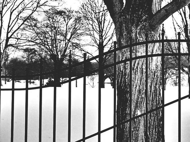 Eye Em Snowscapes Winter 2013-2014♥ Eyeem Snow Black And White Winter