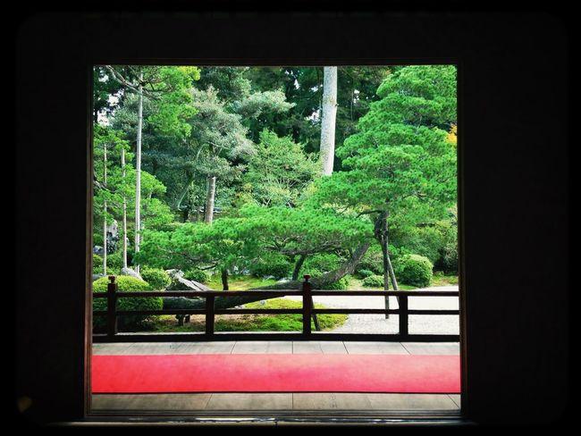 鶴島 Temple Japanese Garden Pine Tree