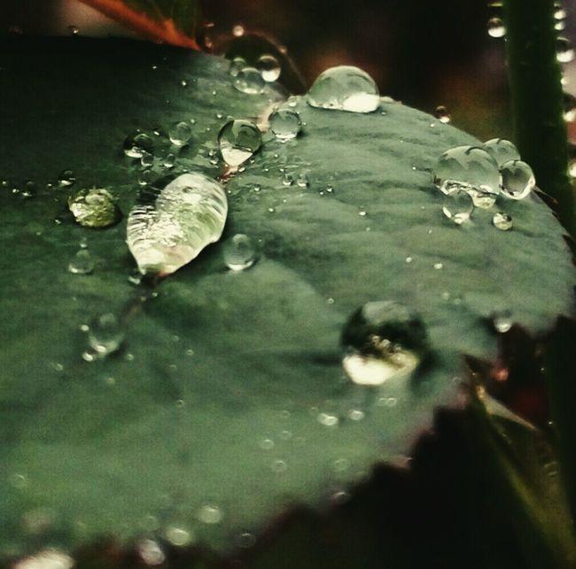 Raindrops Colors Of Nature Mesmorising Colorful Beautiful Love To Take Photos ❤ @$RG...