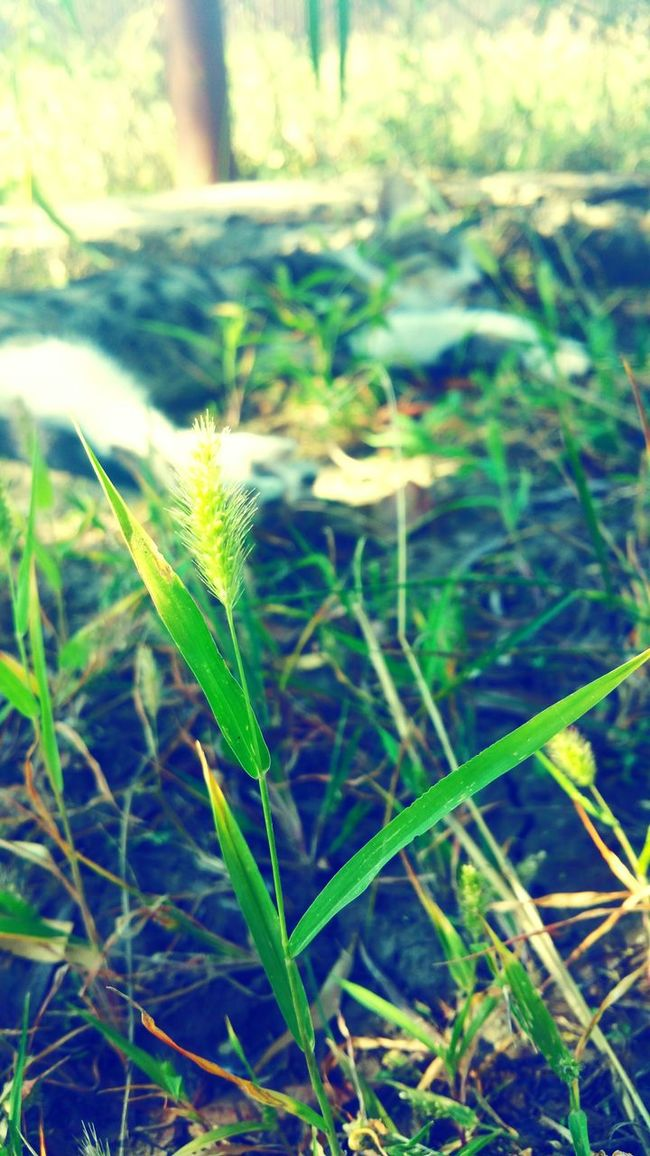 Green Color Grass Selective Focus Lazysunday Cat