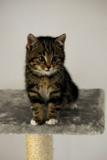 Silver 🐱✨ Domestic Cat Animal Themes Domestic Animals No People One Animal Pets Whisker Indoors  Portrait Feline Mammal Close-up Tabby Cat Day Moments Photoshoot Family Time Cat Brothers Love Brother Home Is Where The Art Is Photography Nikon Home Sweet Home Home Interior