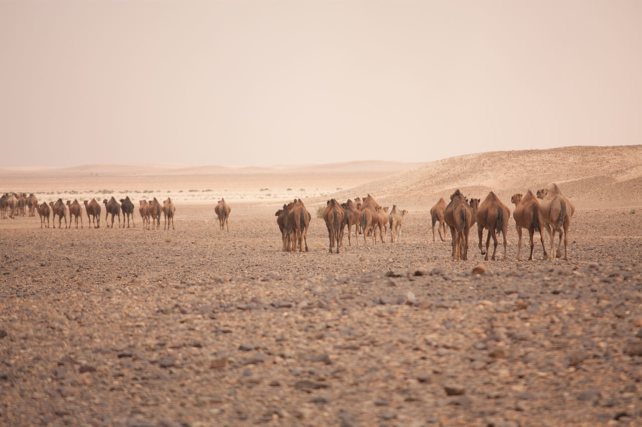 Beautiful stock photos of desert, Animal Themes, Arid Climate, Arid Landscape, Barren