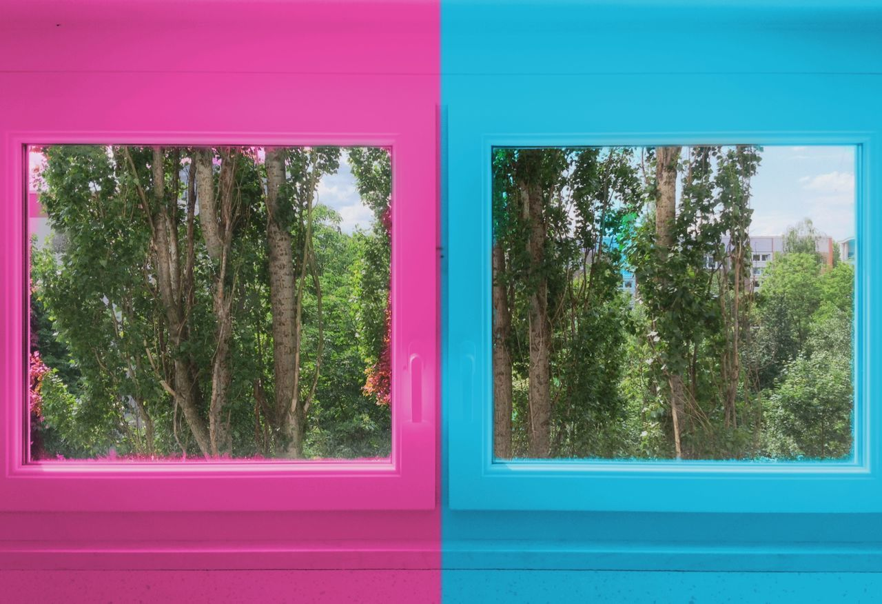 window, tree, multi colored, green color, no people, day, pink color, growth, nature, close-up, plant, red, outdoors, architecture
