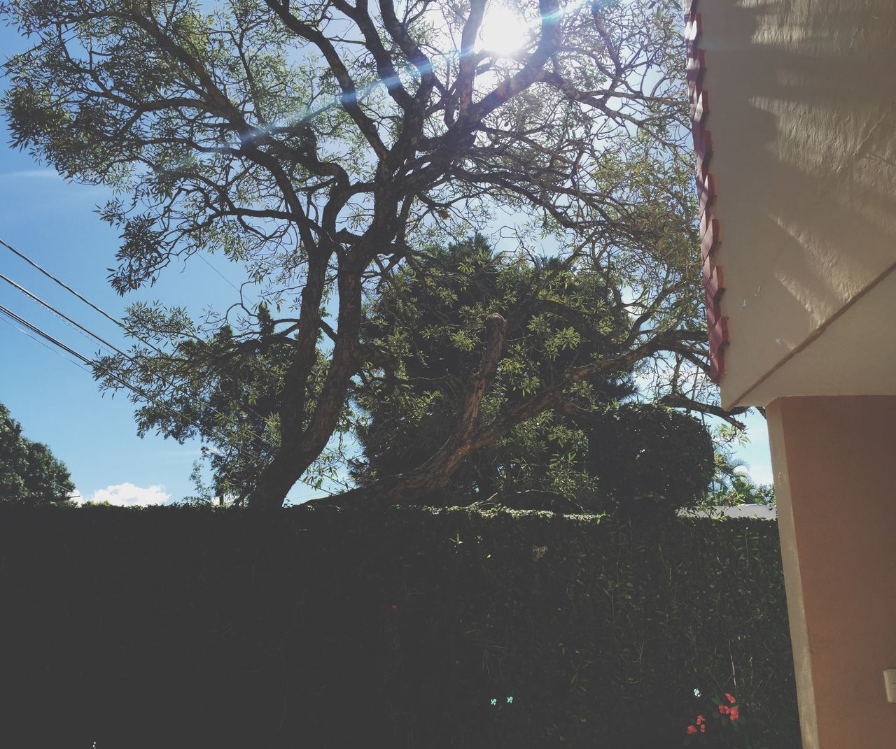 tree, day, low angle view, nature, no people, outdoors, growth, architecture, sky, building exterior