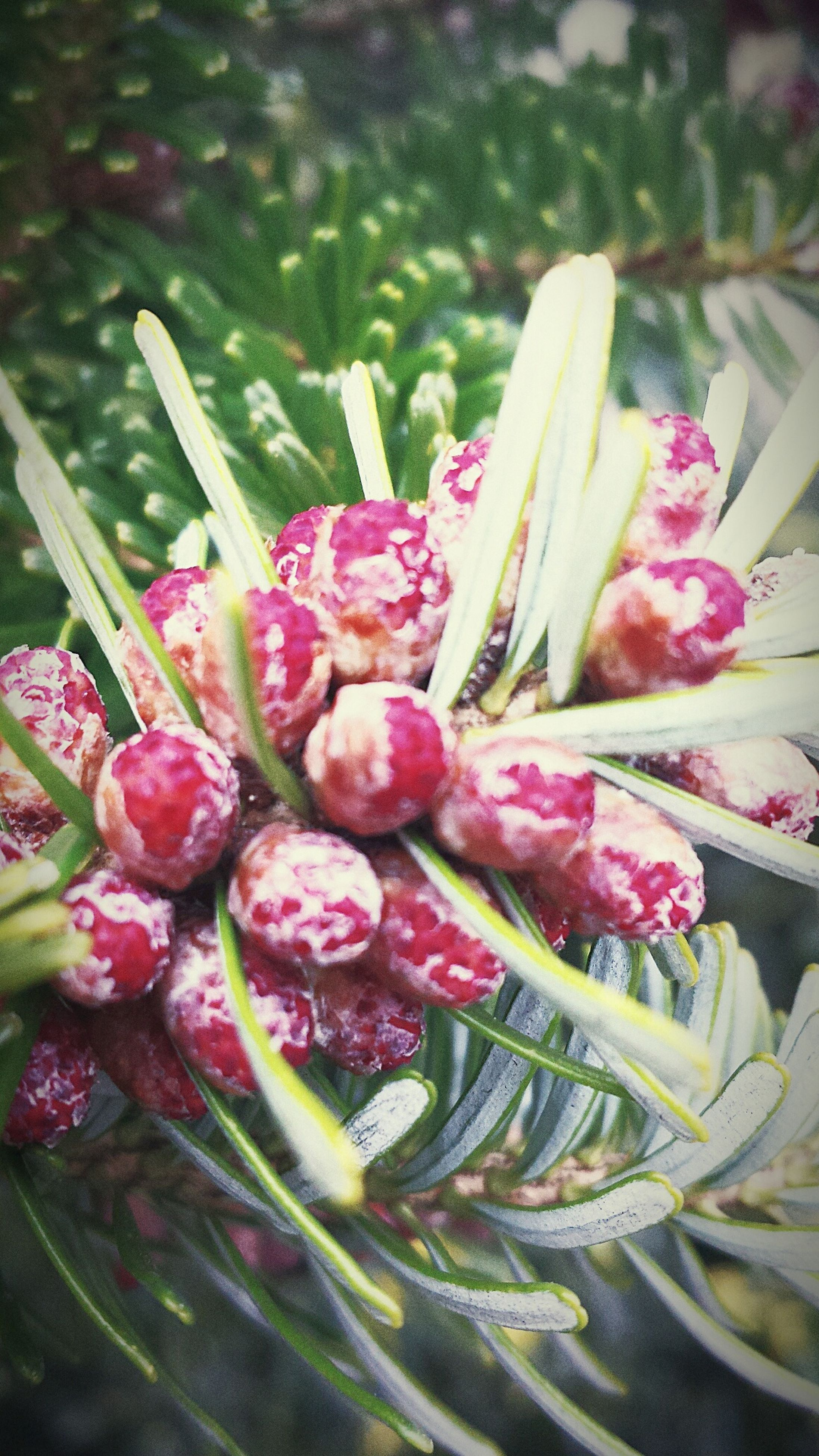 freshness, healthy eating, fruit, food, no people, plant, nature, close-up, outdoors, day
