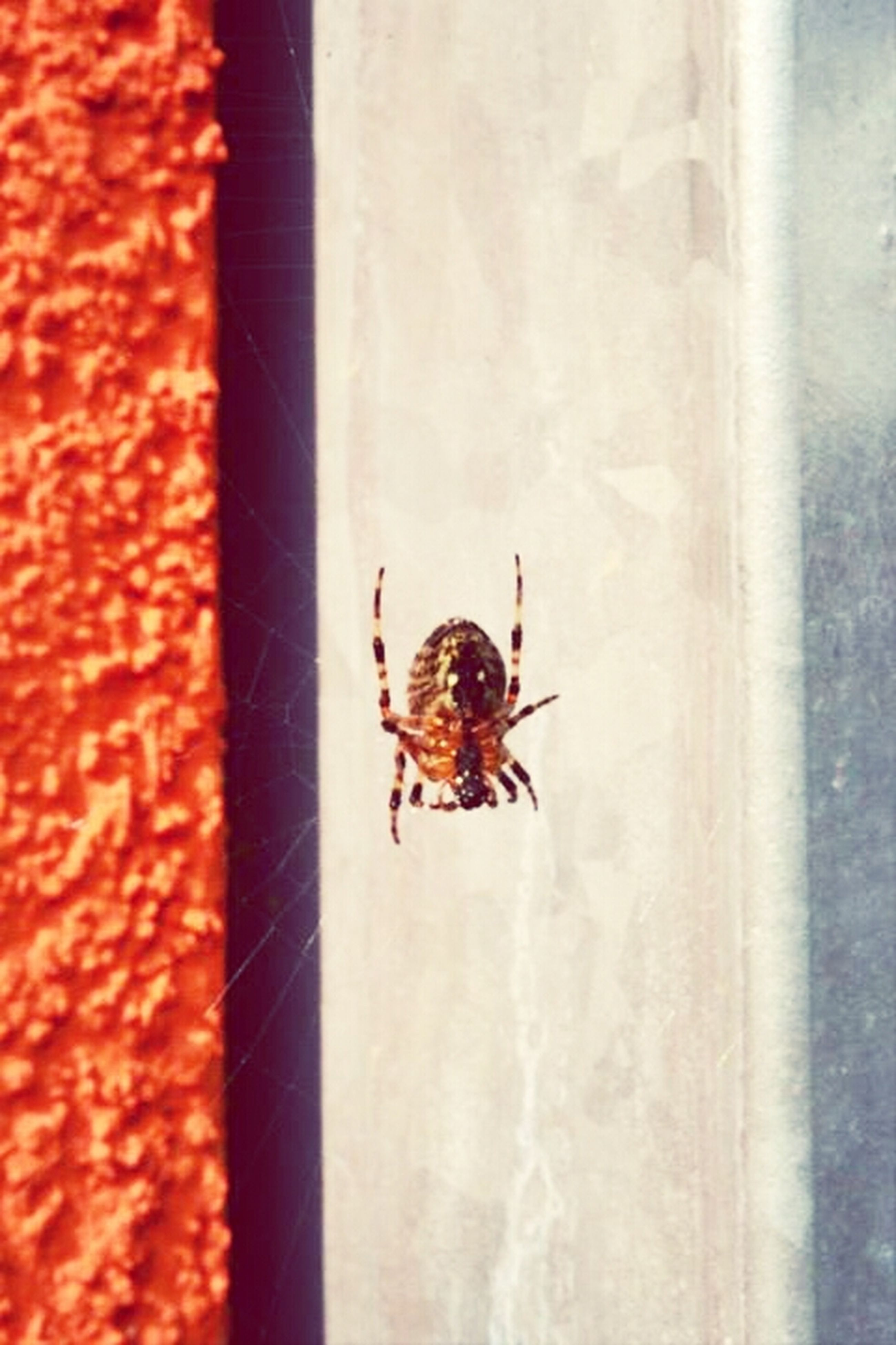 insect, animal themes, animals in the wild, one animal, wildlife, close-up, spider, focus on foreground, wall - building feature, nature, arthropod, selective focus, outdoors, zoology, day, no people, animal antenna, natural pattern, full length, textured