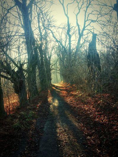 Forestwalk Walking Fulnek Winterwithoutsnow Scary Tree