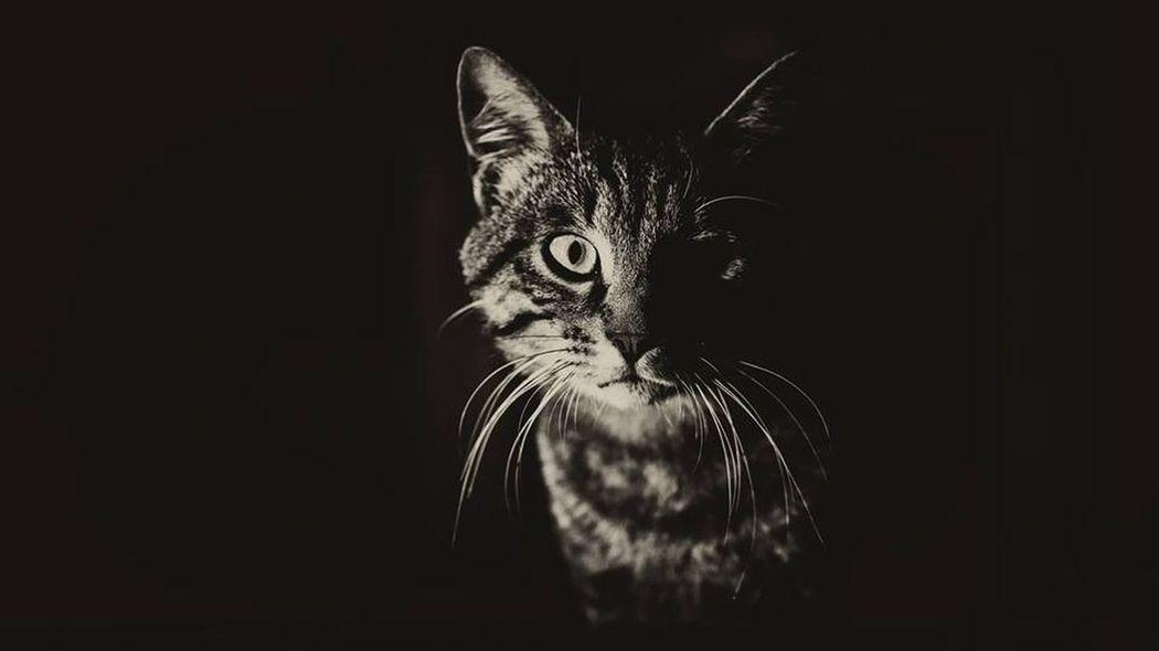 Cat's Eye. Beauty Portrait Silhouette Photography