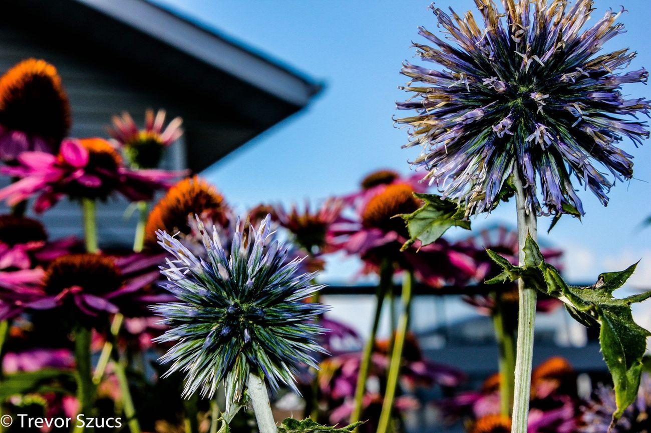 Flowers Gmas Gden