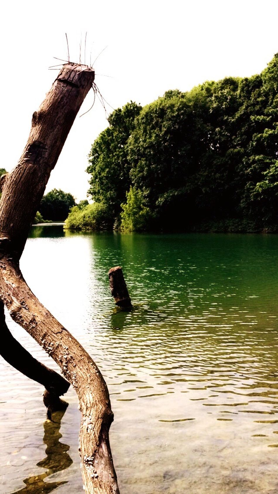 Lake Lake View Lakeshore Afternoon The Essence Of Summer- 2016 EyeEm Awards The Essence Of Summer Sunny Day Tree Green Nature Beautiful Beauty In Nature Love The Great Outdoors - 2016 EyeEm Awards