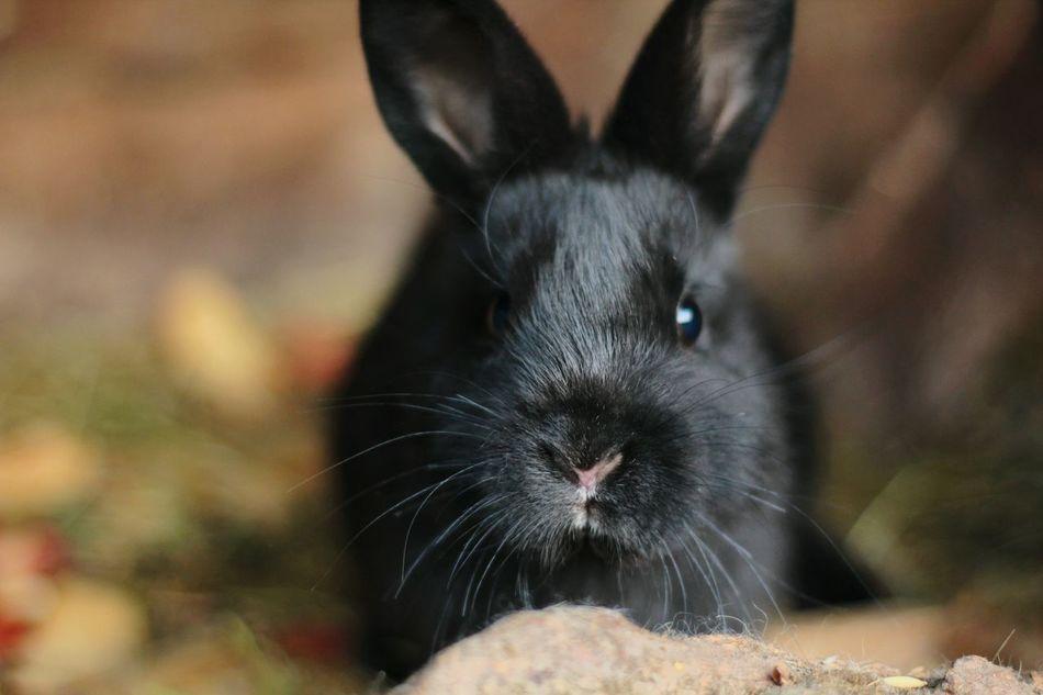 Beautiful stock photos of hasen, Alertness, Black - Color, Curiosity, Cute