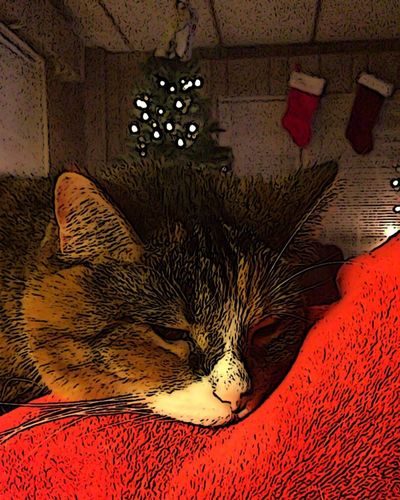 Indoors  No People Illuminated Mammal Close-up Animal Themes Day Cat Animals Sleeping Cat Kent Ohio Portrait Home Interior Whisker Domestic Cat One Animal Feline Tabby Domestic Animals