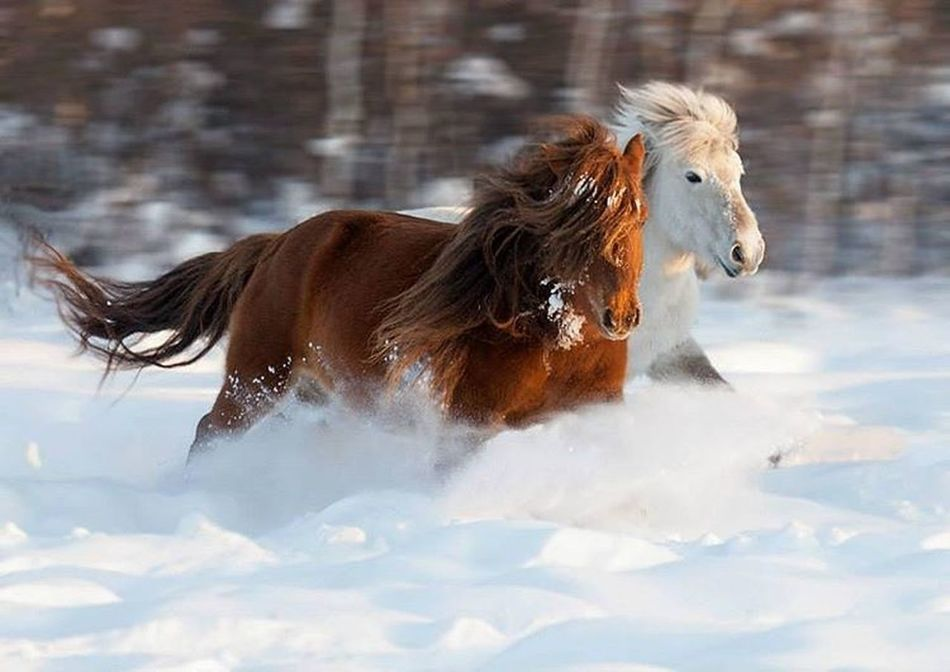 Motion Horse Cold Temperature Winter Domestic Animals Animal Mammal Running Animal Hair One Animal Dog Pets Outdoors Water Snow Day Animal Themes No People Nature First Eyeem Photo