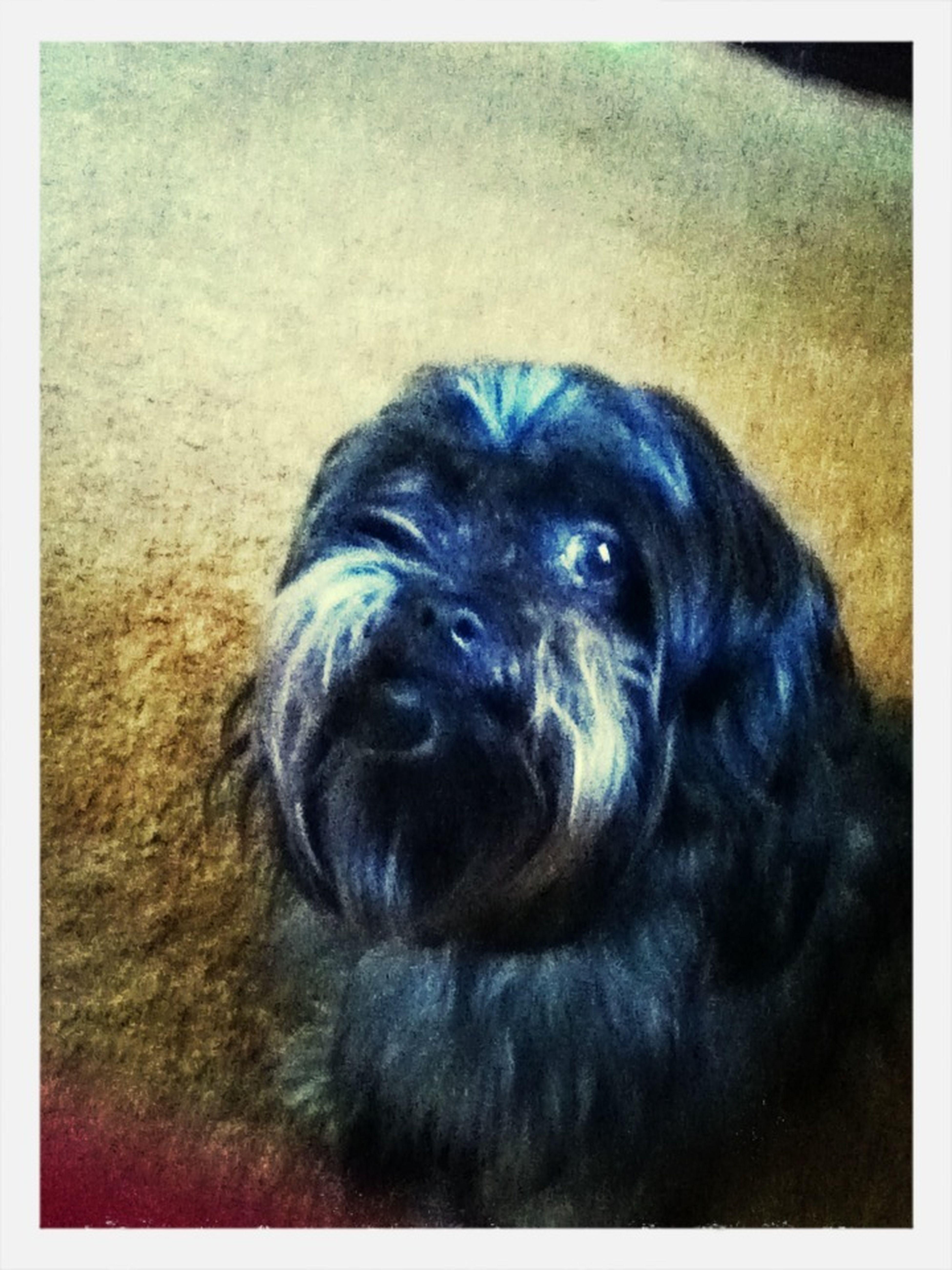 My Dog 4ever