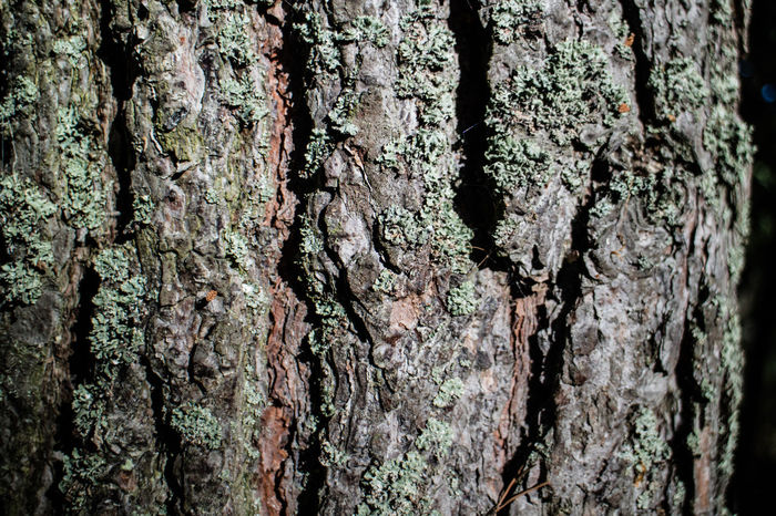 Backgrounds Bark Beauty In Nature Close-up Day Detail Fine Art Photography Focus On Foreground Full Frame Growth Macro Malephotographerofthemonth Natural Pattern Nature No People Outdoors Part Of Rough Textured  Tree Tree Trunk