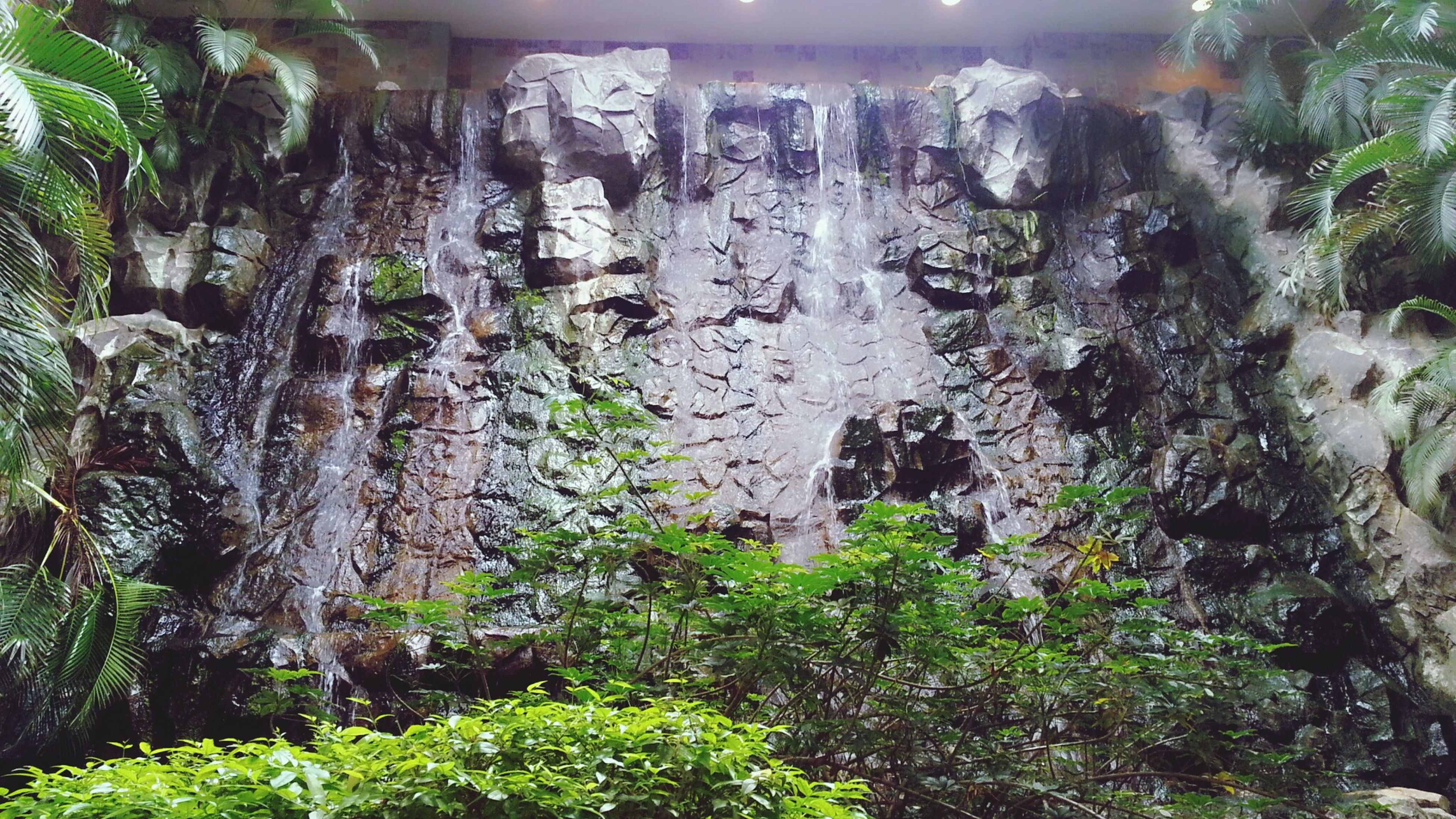 rock - object, plant, growth, tree, nature, moss, rock formation, textured, waterfall, day, outdoors, beauty in nature, green color, rock, forest, tree trunk, high angle view, close-up, no people, sunlight