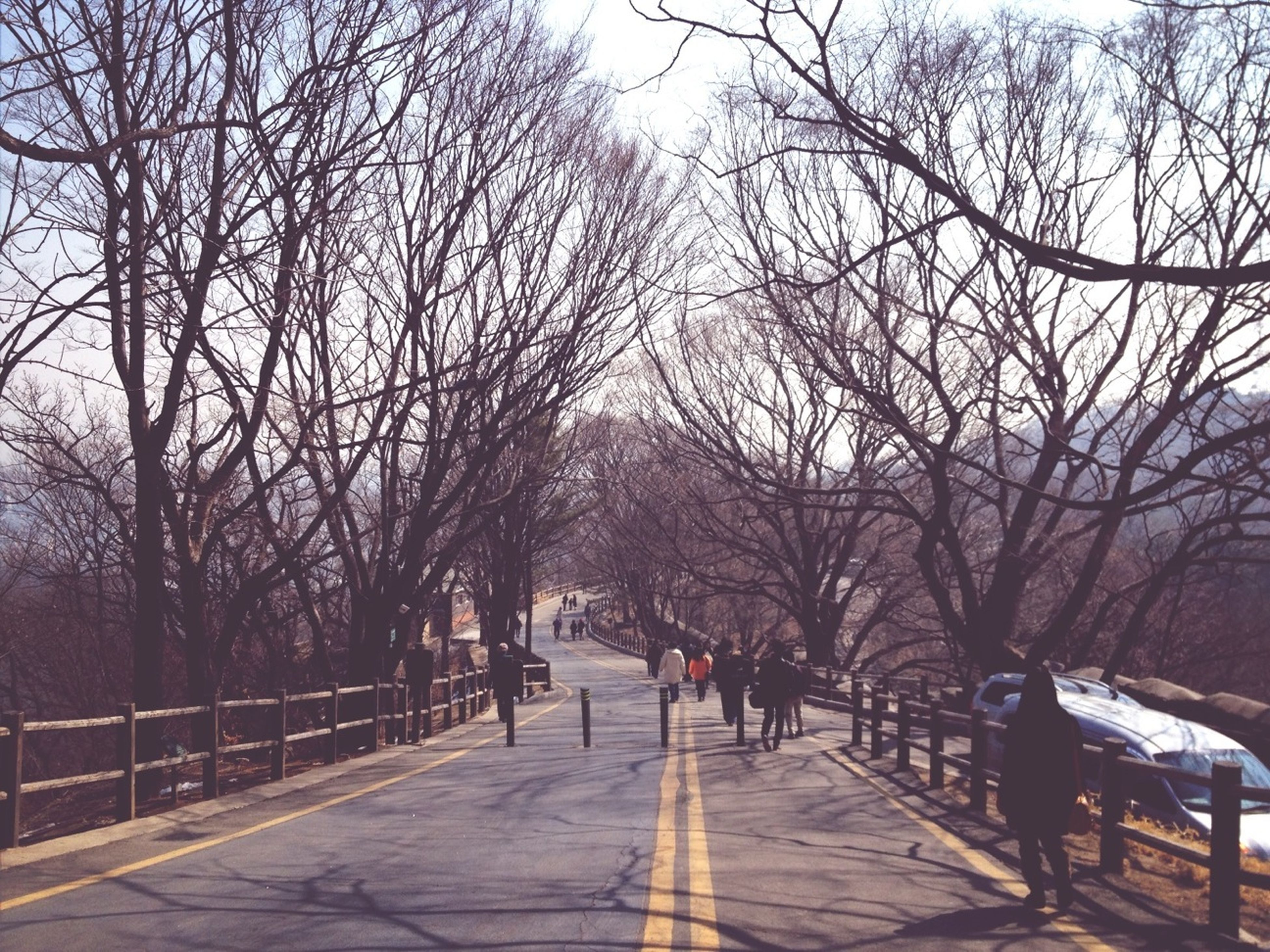 tree, bare tree, the way forward, walking, men, lifestyles, branch, diminishing perspective, person, leisure activity, transportation, footpath, full length, rear view, sky, vanishing point, road, nature
