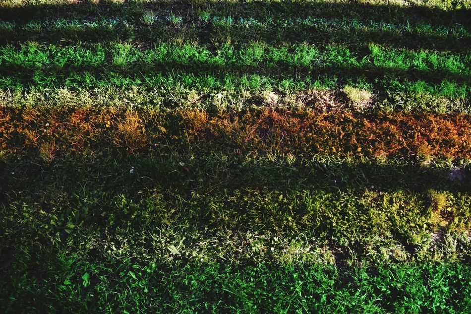 Grass Field Full Frame Green Color Sport Nature Outdoors Backgrounds Playing Field High Angle View Growth Day No People Soccer Field Agriculture Beauty In Nature Exceptional Photographs Malephotographerofthemonth Eyeem Market Break The Mold Art Is Everywhere