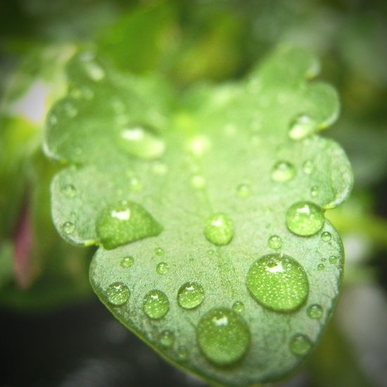 Rainy Days Drop Of Water Leaf Green Green Color Nature Nature Photography First Eyeem Photo