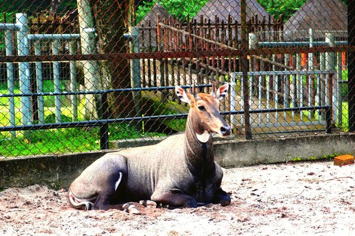 EyeEm Selects Animal Themes Day Animals In Captivity One Animal Outdoors Portrait Nature Nature Zoopark Zoomalaysia ZooLife Zoophotography Close-up Sand Domestic Animals Animals In The Wild
