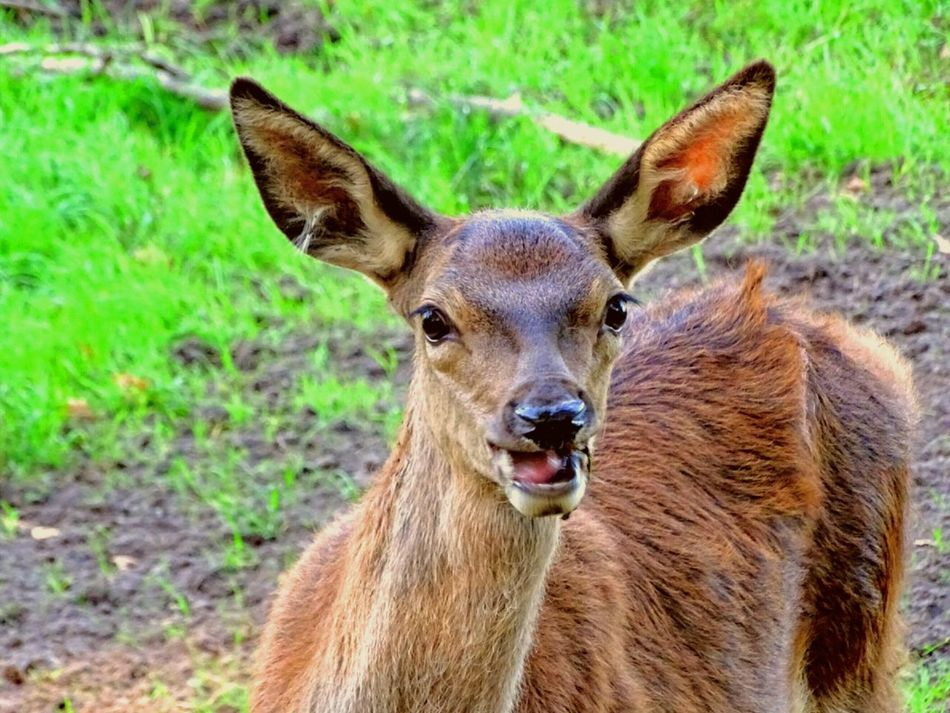Animal Themes One Animal Focus On Foreground Looking At Camera Mammal Zoology Beauty In Nature Nature Wildlife Animals In The Wild Blesswild Portrait Smiling Wild