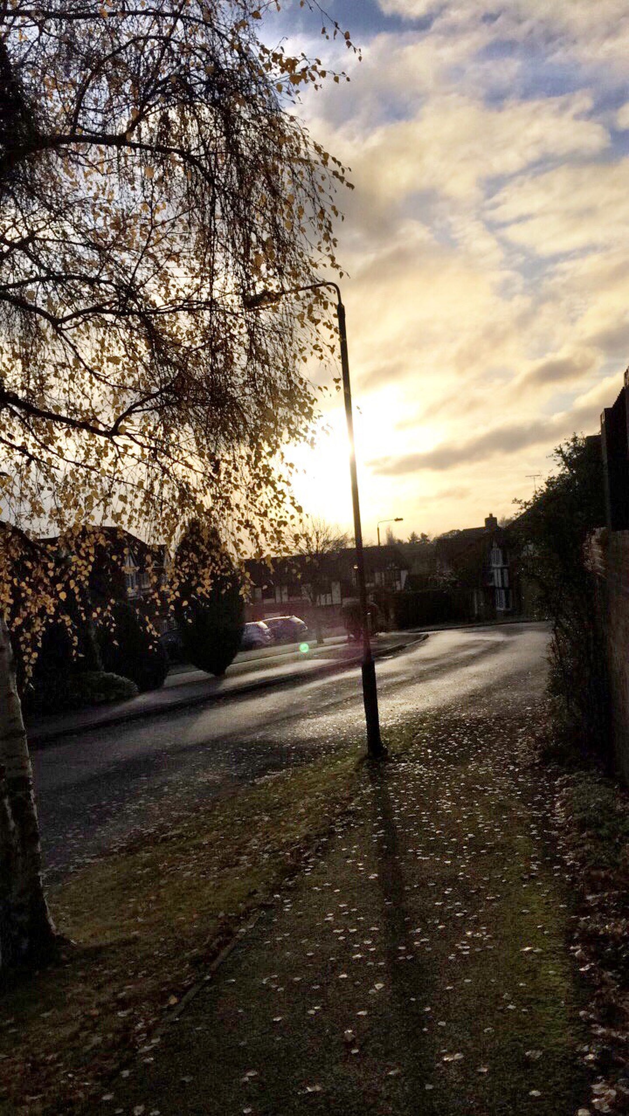 tree, sky, sunlight, cloud - sky, nature, sunset, outdoors, road, no people, beauty in nature, day
