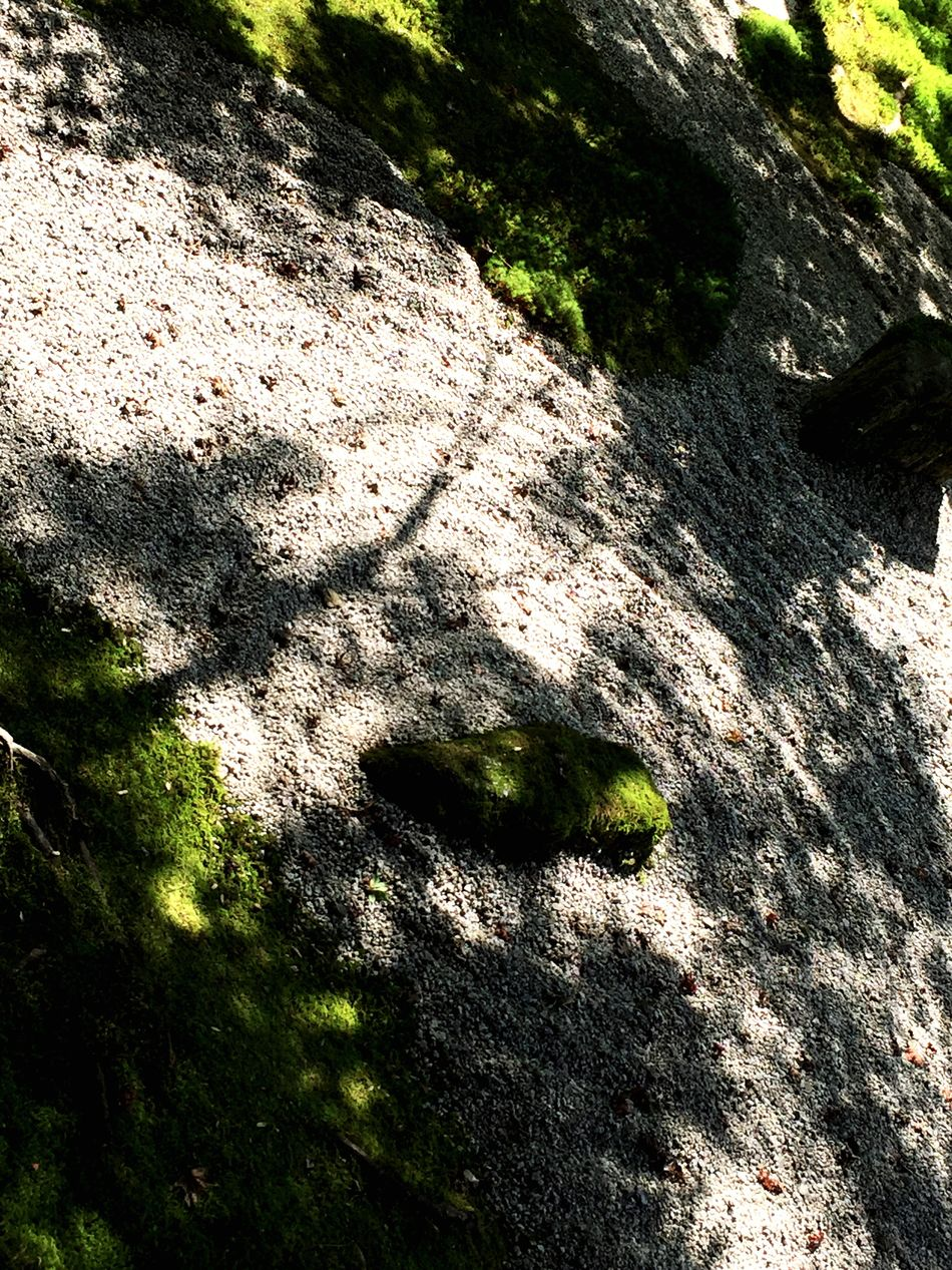 Shadow Nature Light And Shadow Relaxing Taking Photos EyeEm Japan 太宰府 Cool Japan