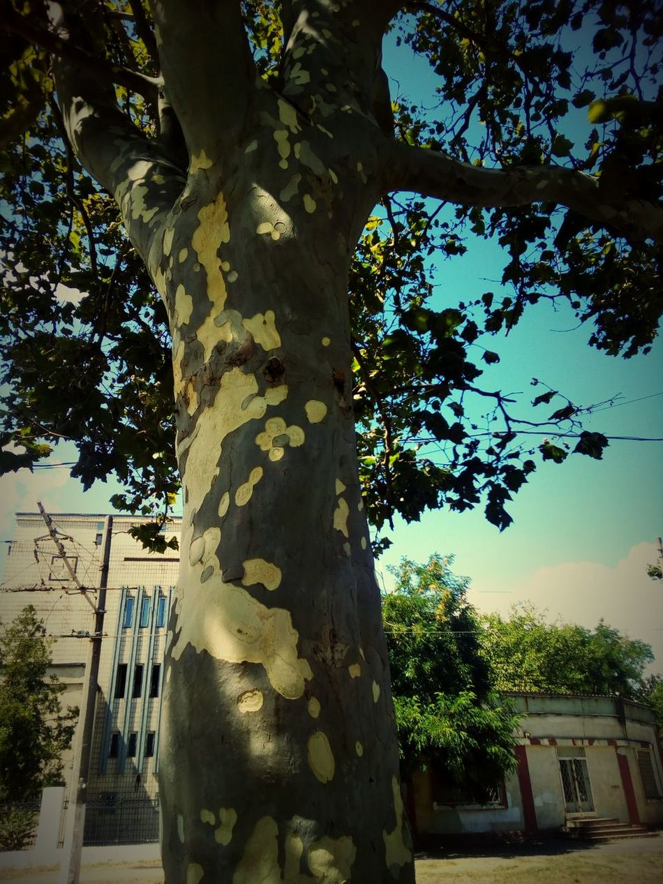 Green Tree Street Odessa Walk