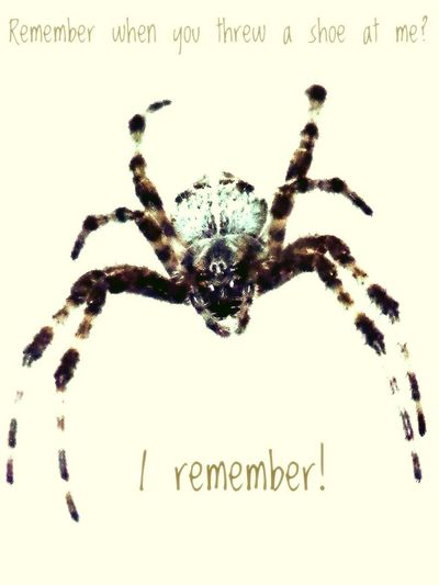 S P I D E R ! Arachnid Arachnid Photography Arachnophobia Bugs Close-up Creeping Creepy Crawly Eight Legged Eight Legs Eyeballs  Fear Funny Funny Comments Indoors  Insects  Night No People Quiet Scary Spider Stillness Text Threatening