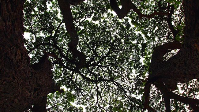 Look Up Tree Silhouette Nature Green Summer Resting Peace Branch