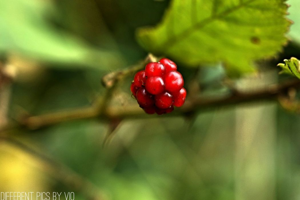 Somethingred Differentpicsbyvio Red Berry Green Forestwalk Walking Around Check This Out Thingsilove Taking Photos