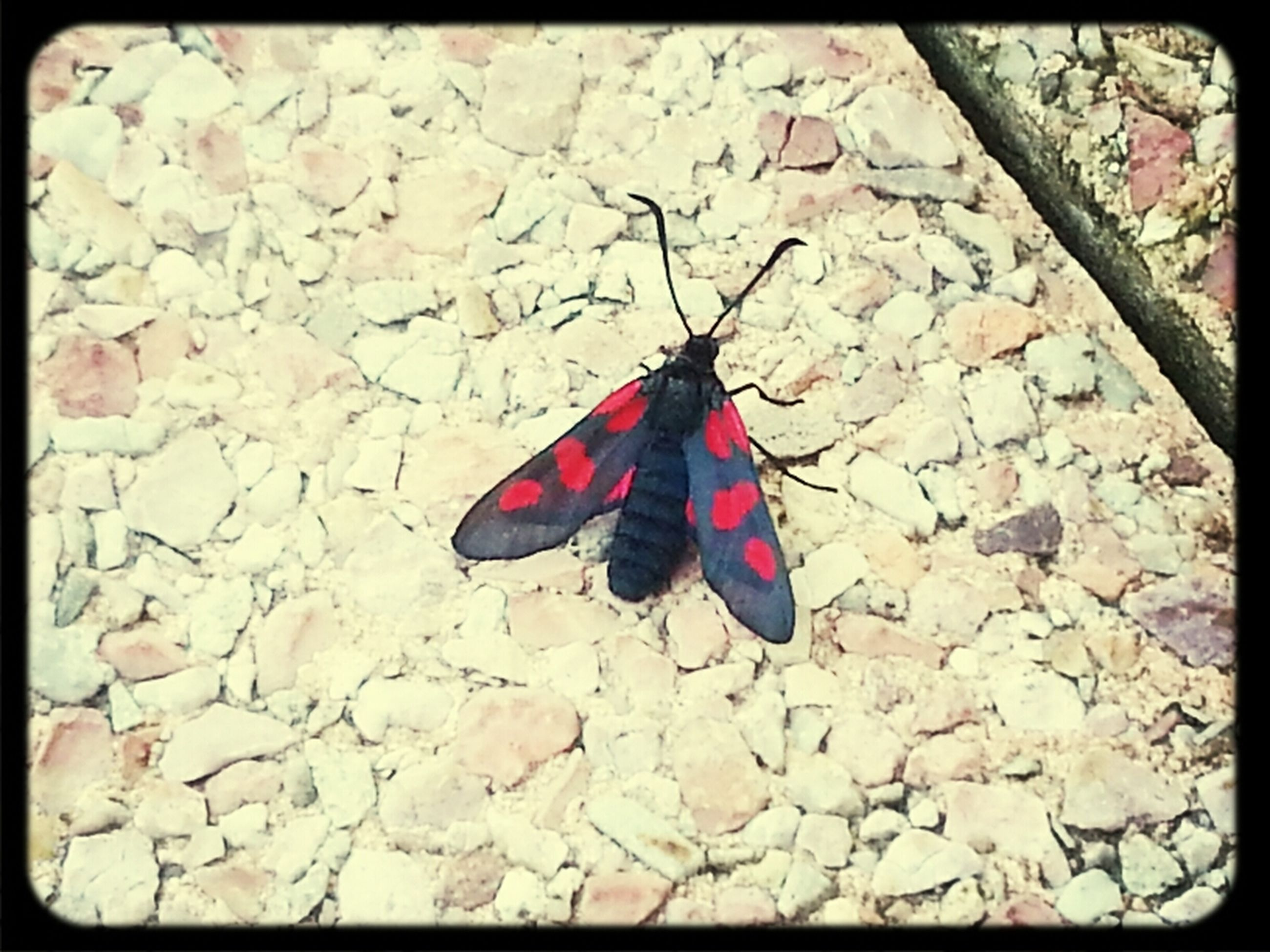 transfer print, auto post production filter, red, high angle view, close-up, day, leaf, outdoors, no people, ground, nature, butterfly - insect, textured, pink color, butterfly, sunlight, one animal, multi colored, autumn, stone