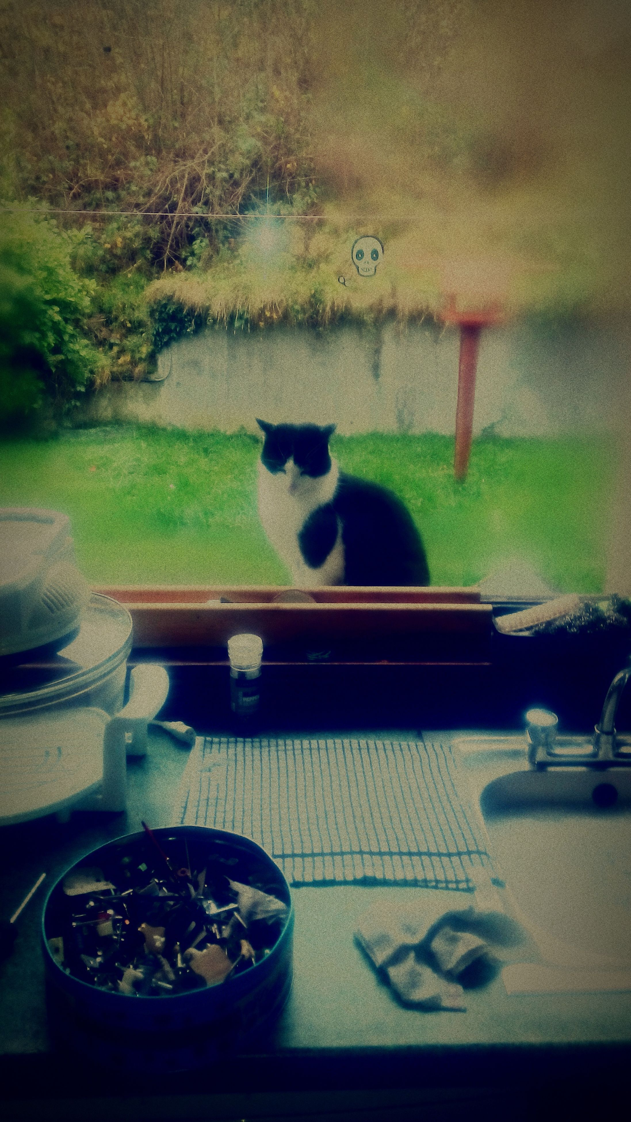 animal themes, one animal, domestic animals, pets, indoors, mammal, domestic cat, cat, window, glass - material, transparent, table, sitting, feline, selective focus, relaxation, no people, focus on foreground, reflection, looking through window