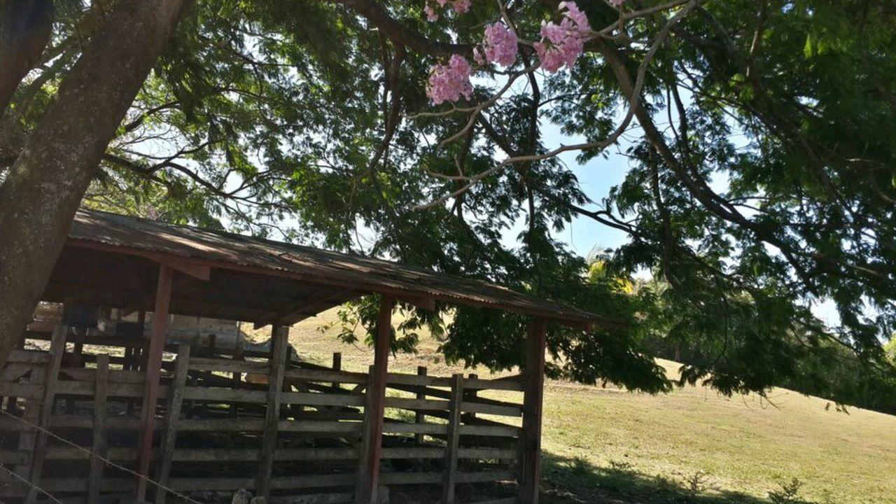 Check This Out Relaxing Enjoying Life Outdoors Farm Guacima Costa Rica