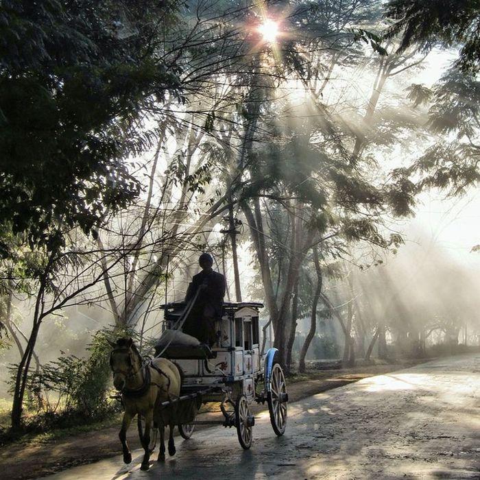 Travelphotography Burma Myanmar Pyinoolwin Horsecarriage Light RaysOfLight Horse
