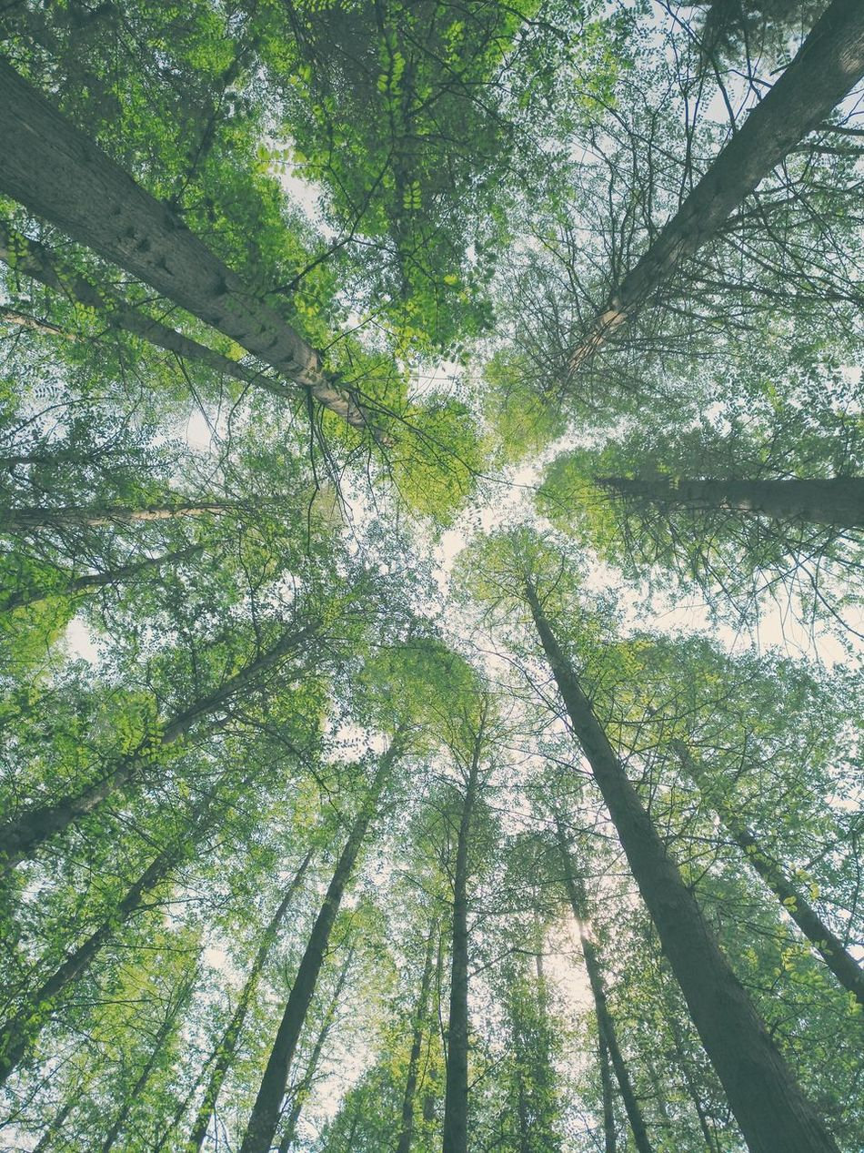 Day Full Frame Tree Green Color Backgrounds Growth No People Outdoors Nature Low Angle View Grass Close-up