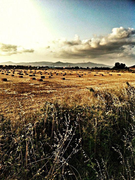 El Prat De Llobregat EyeEm Nature Lover EyeEm Best Shots