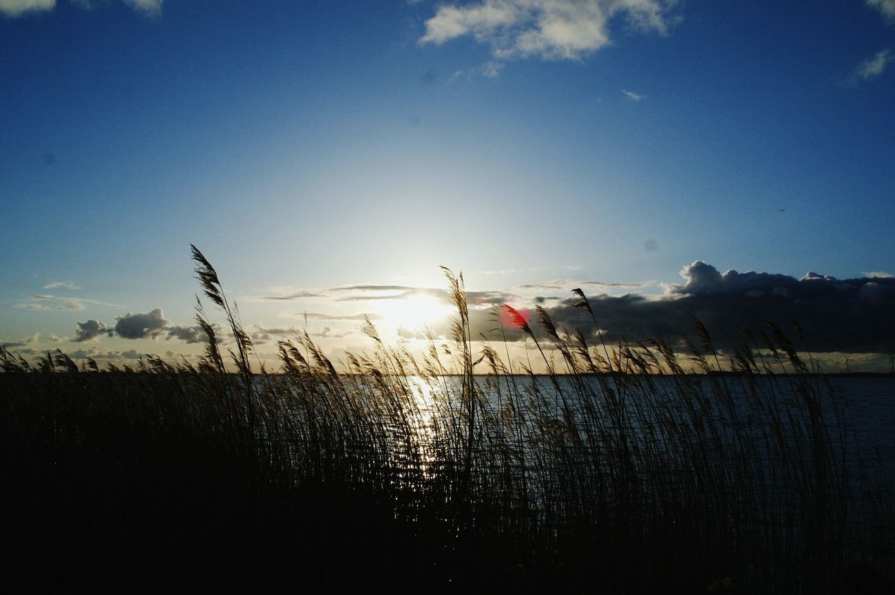 Boulevard Beach View Sunset Harderwijk Netherlands
