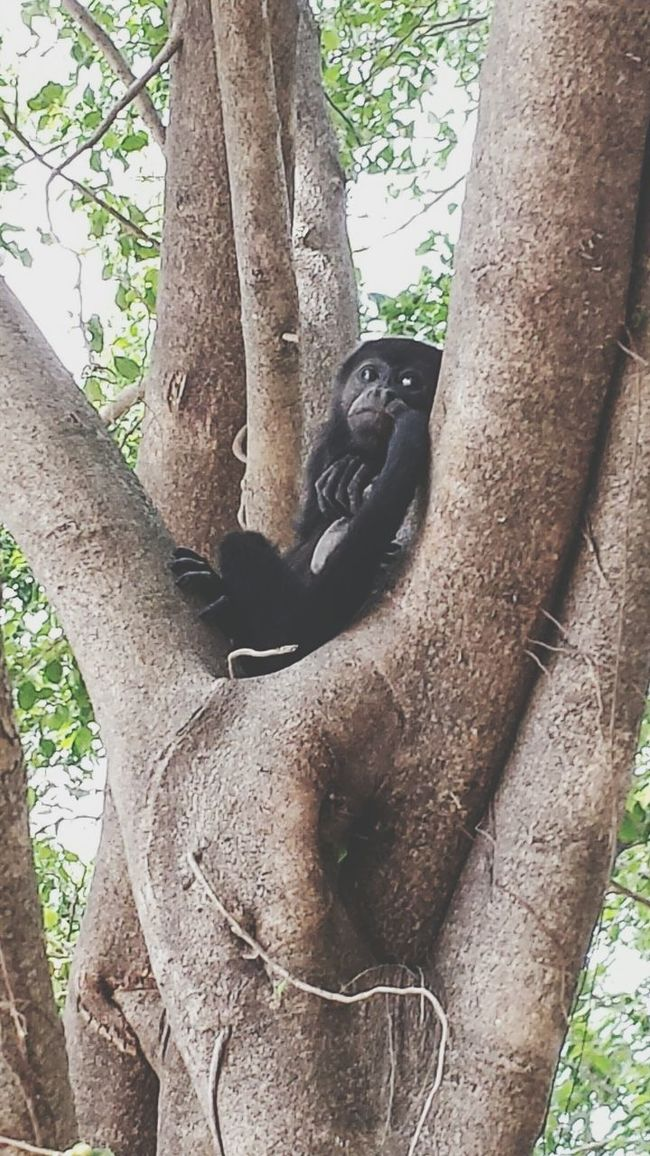 Hanging Out Taking Photos Check This Out Relaxing Outdoors Telling Stories Differently Tree Cheese! On The Beach Costa Rica Monkey Business Bored