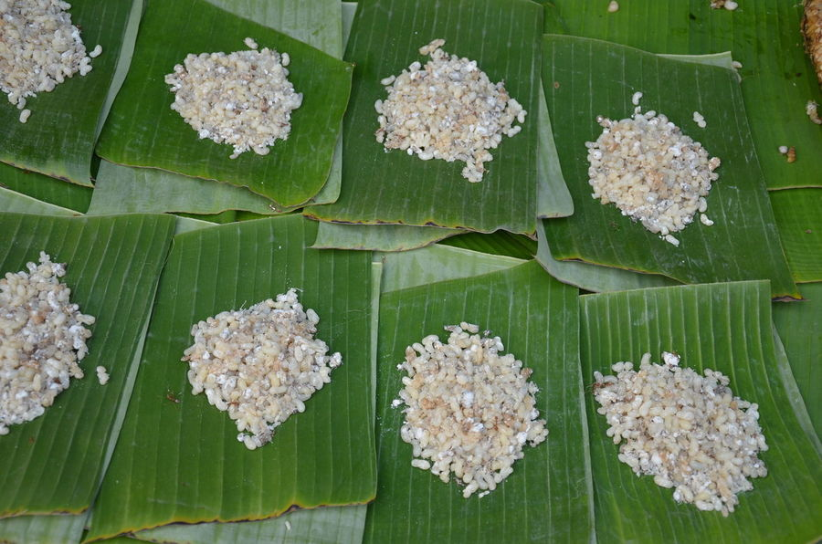 Ant eggs on banana leaf Thai local food. Local Food Culture Ant Eggs Backgrounds Close-up Day Directly Above Egg And Soldiers Food Food And Drink Freshness Green Color Leaf Nature No People Outdoors