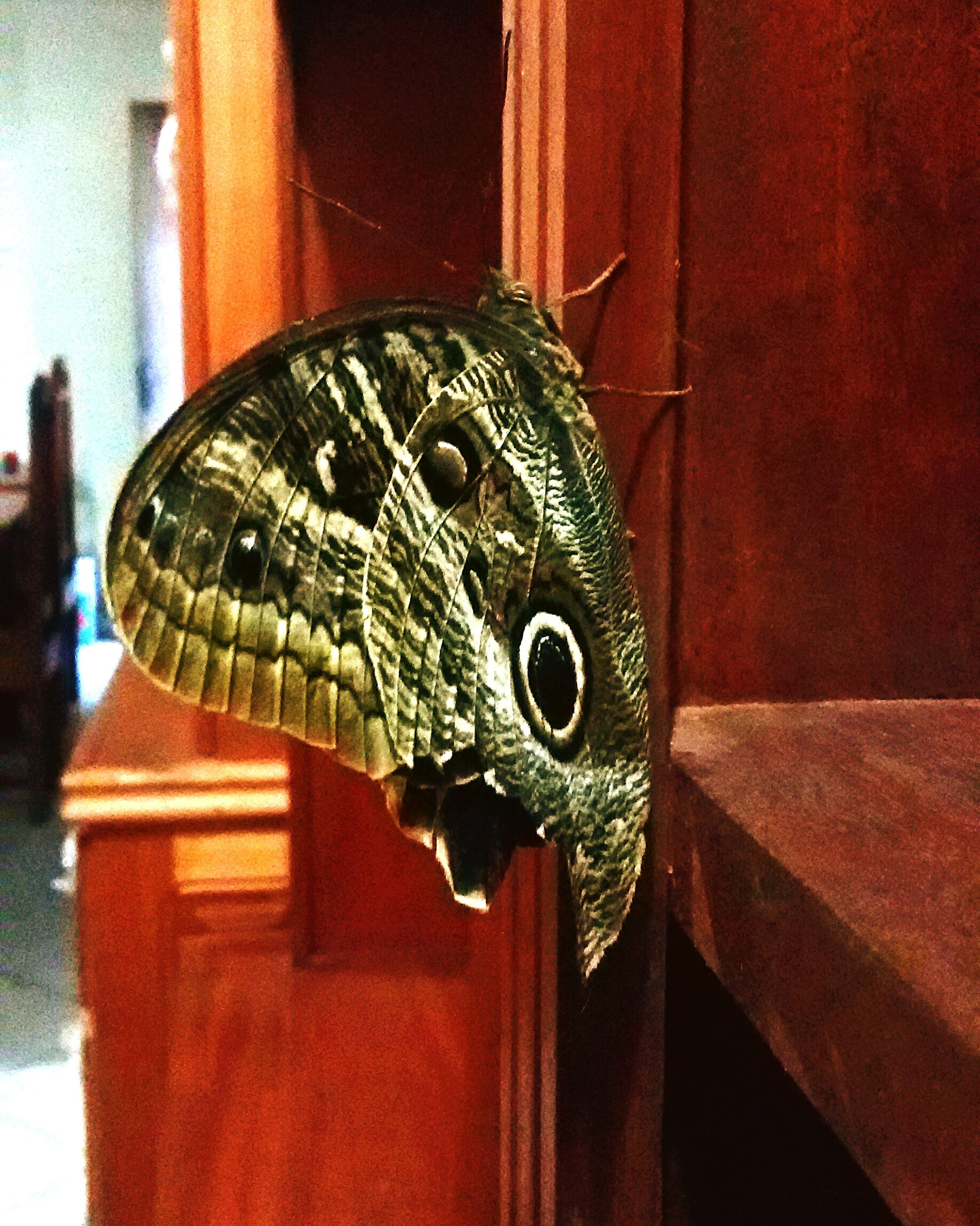 one animal, close-up, focus on foreground, animal themes, animals in the wild, built structure, wildlife, outdoors, day, building exterior, architecture, red, no people, wall - building feature, butterfly - insect, nature, butterfly, insect, side view, animal representation