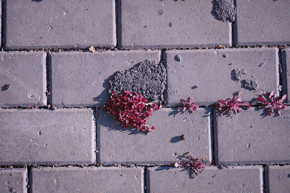 Somewhere, somehow Life always finds a way to emerge 🍃🌸 Live And Let Live Cohabitation Closeup Urban Nature Red Reddish Shades Of Red Patterns On The Floor Coming To Life Creation Art Is Everywhere MnM MnMl Mnmlsm Minimalism Minimal Minimalistic Minimalmood Minimalist Minimalobsession Minimalart Minimalarchy Mobilephotography