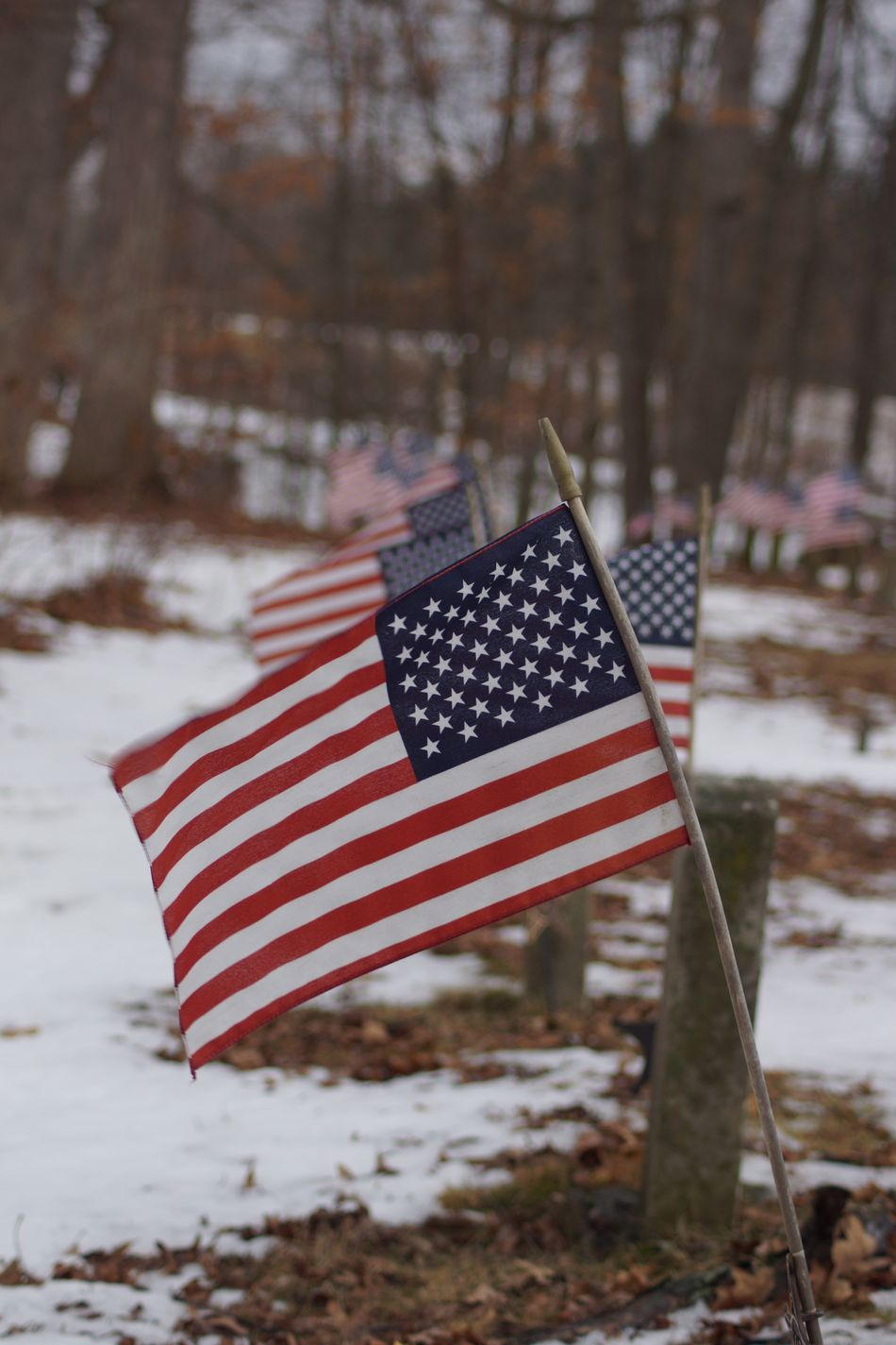 Beautiful stock photos of veteran's day, American Culture, American Flag, Blue, Cemetery