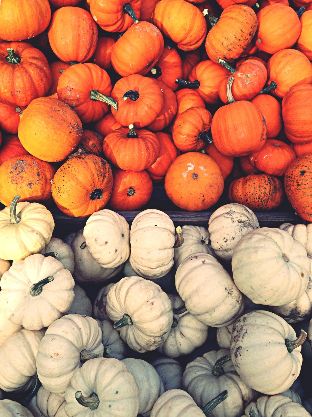 Beautiful stock photos of pumpkin, Abundance, Berlin, Day, Food